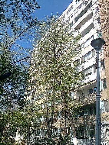 Inchirieri apartamente PIATA SUDULUI Alexandru Obregia zona Cultural
