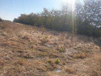 Proprietar vand teren intravilan satul Carligei, comuna Bucovat, judetul Dolj