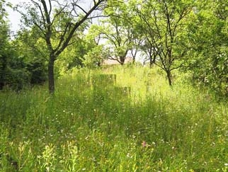 VANZARE teren JUDETUL DAMBOVITA - Comuna Pietrosita